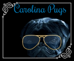 puppies for sale in south carolina and north carolina
